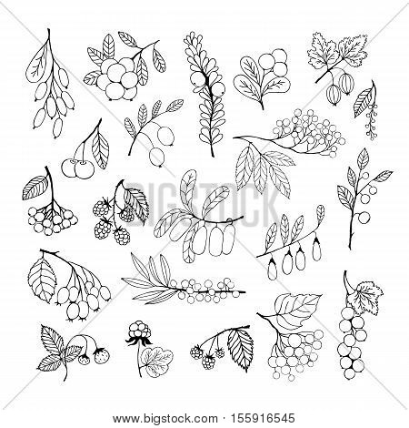 Collection of garden and wild berries. Black silhouettes isolated on white background. elementes for design
