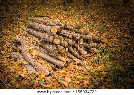 Pile of wood logs ready for winter heat logging fireplace timber material