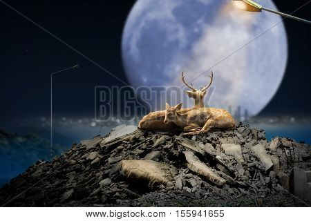 Deer Couple in Rubble on a Full Moon Night