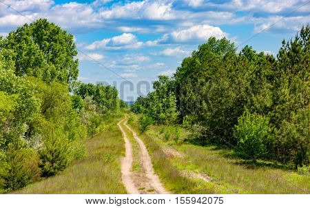 Nice summer landscape with rut road in forest