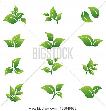 Leaves, vector, icon, set against a white background. Various forms of green leaves of trees and plants. Elements for eco and bio logos.