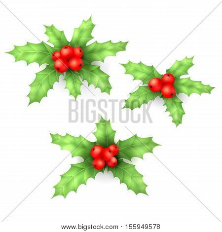 Floral winter branch of red christmas decor berry symbol set. European christmas berry holly ilex aquifolium leaves and fruit. Decorative vector holly christmas berry leaf traditional ornament symbol