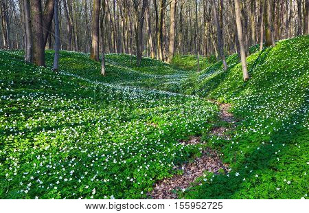 Wide path goes through huge meadows covered with white flowers as beads and misterious shadows lay on the ground.