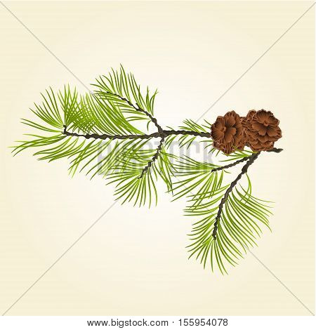 Conifer Branch Pine  with pine cones natural background vector illustration