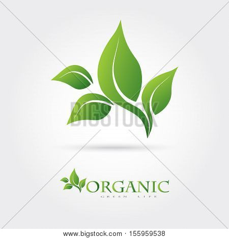 Green vector icon from green leaves. It can be used for eco, vegan, herbal, health care, or the nature of logo design concepts.