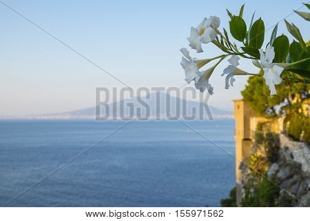 Picturesque View of Mount Vesuvius with White Tropical Flowers in the Foreground