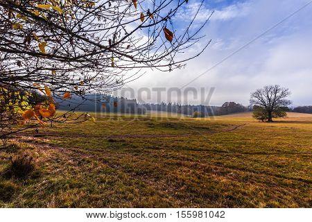 Pasture and trees in autumn. Moravian landscape Velenov.