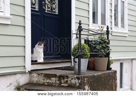 BERGEN, NORWAY - JULY 3, 2016: Norwegian cat is sitting on the threshold of his house as the owner of the home.