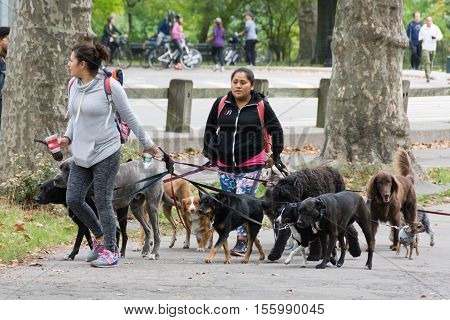 Professional Dog Walkers In Central Park