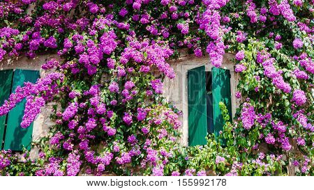 Sirmione house in the old part of town with bougainvillea glabra paper flower also known as lesser bougainvillea Lake Garda Lombardy Italy Europe