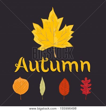 autumn leaves set isolated on brown background. simple cartoon flat style vector illustration.