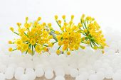 White homeopathic granules and yellow flowers on white backgrouns poster