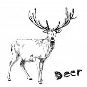 Hand drawn deer Vector. Visit my portfolio for big collection of doodles poster