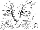 Hand drawn cat. Visit my portfolio for big collection of doodles poster
