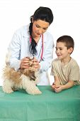 Veterinary examine puppy mouth and the child looking with happy face poster