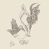 Illustration rooster and hen. Series of farm animals. Graphics, sketch, hand drawing birds family. Rooster fighter and a bully, ready to defend brood and chicken. Vintage engraving style. Family day poster