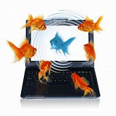 Goldfish and laptop. Collage. poster