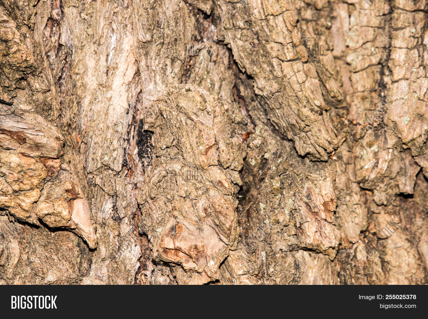Rough Brown Tree Bark Texture Of A Trunk Background