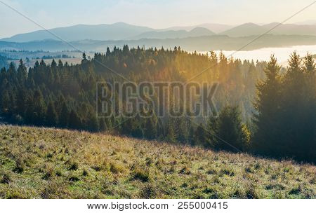 Autumn Landscape In Mountains. Spruce Forest On A Grassy Hill. Glowing Fog In The Distant Valley. Wo