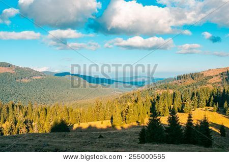 Beautiful Mountainous Landscape. Spruce Forest On Hill Sides. Wonderful Weather With Fluffy Clouds O