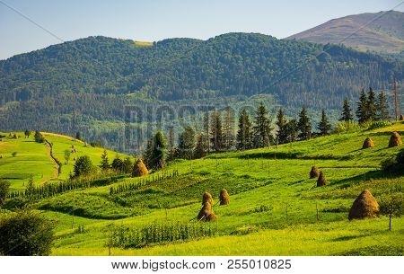 Agricultural Fields With Haystacks On Hills. Beautiful Summer Scenery In Mountains