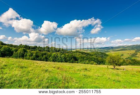 Bright Autumn Day In Good Weather. Fluffy Clouds On A Blue Sky Above Rural Landscape
