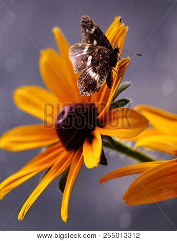 A Brown Butterfly Sits On A Yellow Flower