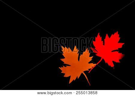 Yellow And Red Paper Maple Leaf On Black Background. Hello Autumn Concept. Handmade Crafts. Copy Spa