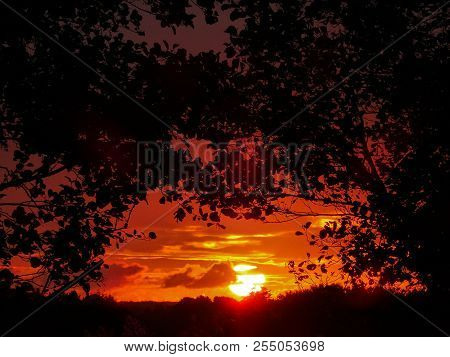 Reddish Sunrise Seeing Through Trees. Trees Silhouettes On The Sides In Focus And The Sun In The Bac