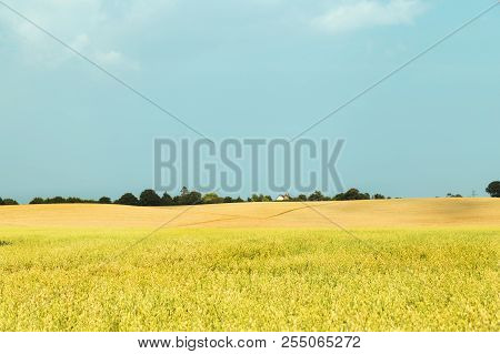 Idyllic Rural View Of Farmland Hill And Ripening Cereal Crops And Beauty Of Essex Landscape - Uk