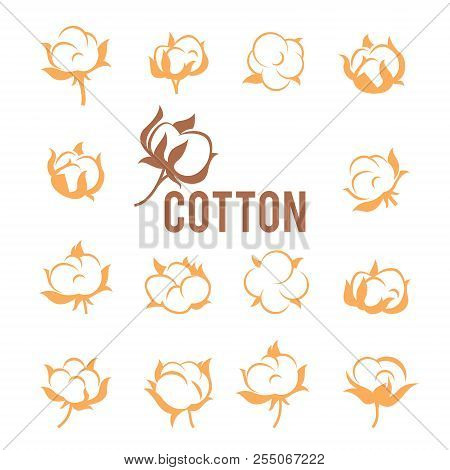 Cotton Logos, Icons, Labels, Stickers And Emblems. Cotton Flower Plant, Organic Ball Fluffy Boll.