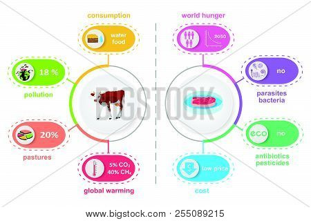 Cultured lab-grown meat infographics. Comparison of synthetic in vitro food and beef. Biotechnological industry and ecological concept. Color vector illustration poster