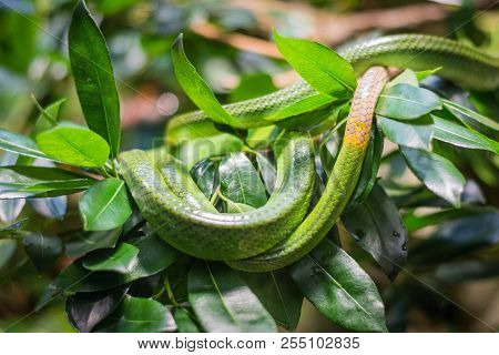 Green Snake On The Branch In Aquarium In Berlin (germany)