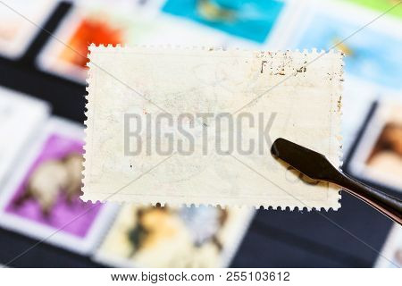 Philately Concept - Tongs Keeps Postage Stamp With Bad Glue Back Side Over Stockbook