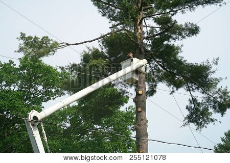 Equipment And Workers Working On Trimming Trees In Residential Site