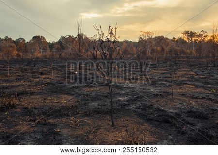Result After A Controlled Fire Burn.