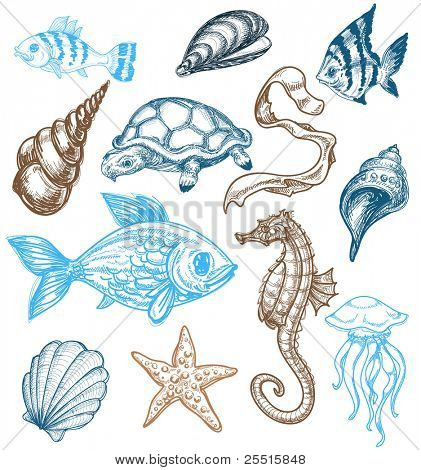 Marine life drawing