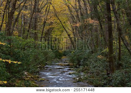Mountain Stream With Banks Of Rhododendron And Arching Trees With Yellow Autumn Leaves, Great Smoky
