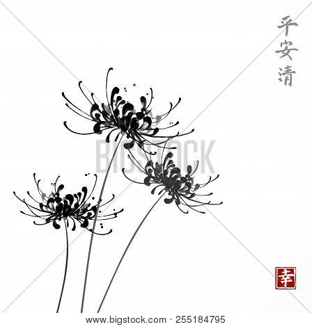 Three Black Chrysanthemum Flowers On White Background. Traditional Oriental Ink Painting Sumi-e, U-s