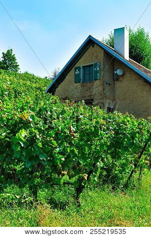 Lavaux, Switzerland - August 30, 2016: Chalet And Lavaux Vineyard Terraces Hiking Trail, Lavaux-oron