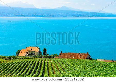 Lavaux, Switzerland - August 30, 2016: Chalets Near Vineyard Terraces Hiking Trail Of Lavaux, Lake G