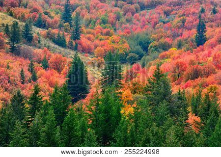 Mountains with fall autum colors from maple pine trees gold orange red and green