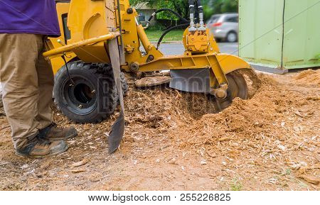 Stump Grinder In Action Tree Cut Nature Is Destroyed