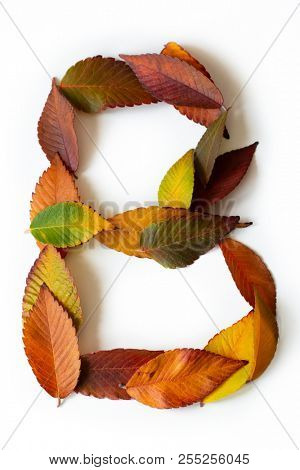 Letter B of colorful autumn leaves. Character B mades of fall foliage. Autumnal design font concept. Seasonal decorative beautiful type mades from multi-colored leaves. Natural autumnal alphabet.
