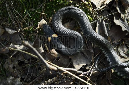 Spring, Grass Snake And Sun