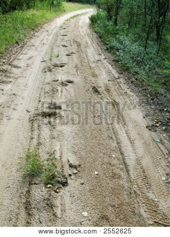 Forest Sand Road