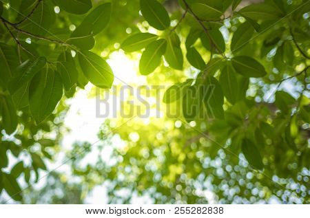 Close Up View Of Natural Green Leaves On Greenery Blurred Background And Sunlight At Public Park For
