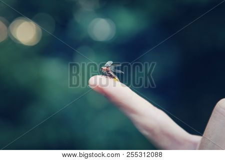 Firefly on a child's finger, soft focus on finger, motion blur on firefly
