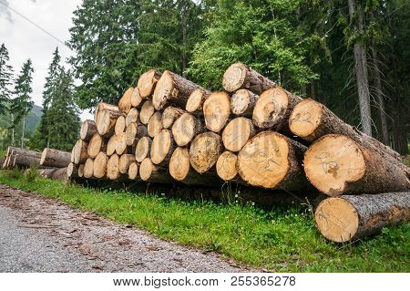 Trunks of trees with denoted tree trunk diameter stacked on the ground poster
