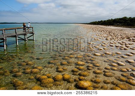 Thrombolites - Lake Clifton - Western Australia poster